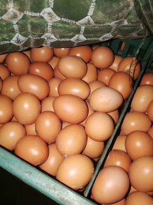 这是一张关于红皮鸡蛋 食用 箱装 的产品图片