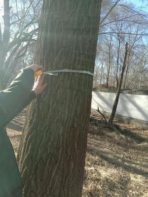 这是一张关于榆木 的产品图片