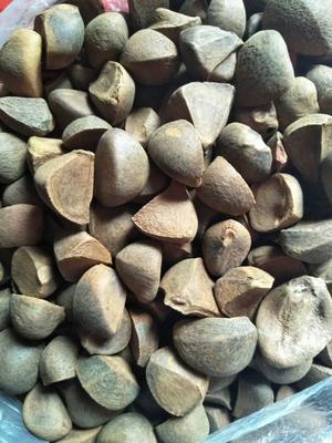 这是一张关于油茶籽 的产品图片