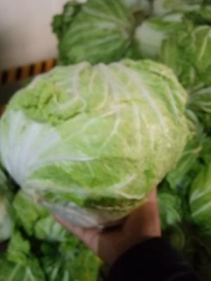 河南省开封市通许县东京868 3~6斤 净菜