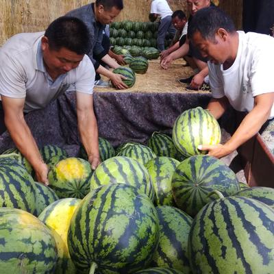 山东省济宁市泗水县甜王西瓜 10斤打底 10成熟 1茬 有籽