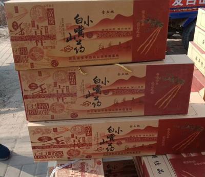 河北省衡水市安平县小白嘴白山药 40~50cm