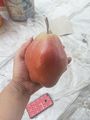 这是一张关于红香酥梨 60mm以上 150-200g 的产品图片