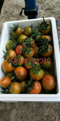 辽宁省盘锦市大洼县草莓柿子 1 - 2两以上
