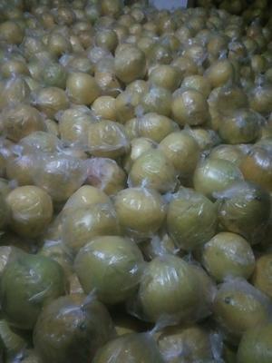 四川省广安市岳池县蜜柚 2.5斤以上