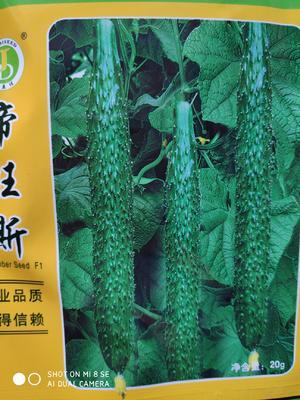 这是一张关于帝旺斯青瓤黄瓜种 杂交种 ≥90% 的产品图片