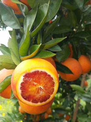 这是一张关于塔罗科血橙 60 - 65mm 4两以下 的产品图片