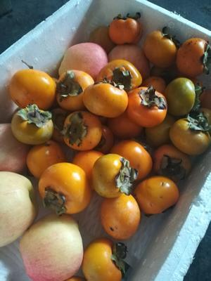 这是一张关于脆柿 2 - 3两以上 的产品图片