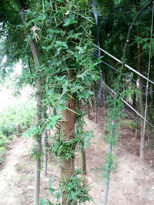 山西省运城市绛县皂角树