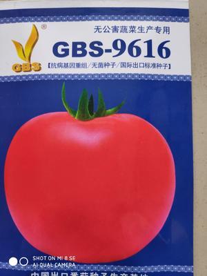 这是一张关于GBS9616粉果番 ≥99% 杂交种 ≥90% 的产品图片