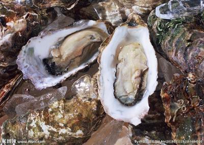 这是一张关于山东乳山牡蛎 人工殖养 1-2两/只 的产品图片