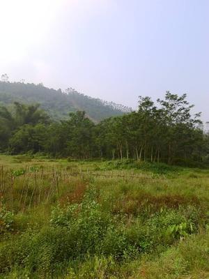 这是一张关于灌木林地 出租 30~50年 100~500亩 的产品图片