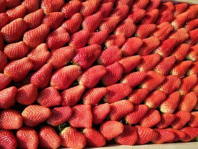 山东省烟台市福山区甜宝草莓 30克以上