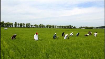 黑龙江省哈尔滨市五常市稻花香二号大米 一季稻 粳米 一等品