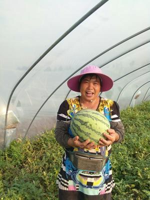 陕西省宝鸡市凤翔县美都无籽8424 无籽 1茬 9成熟 15斤打底
