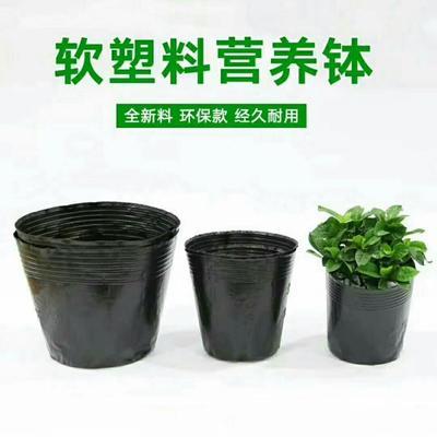 江苏省徐州市新沂市育苗袋