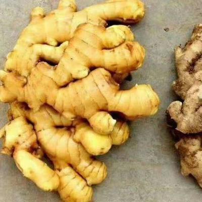 这是一张关于鲁青大姜 6两以上 带土 的产品图片