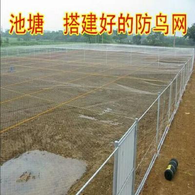 江苏省徐州市新沂市防鸟网