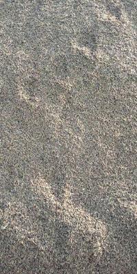 内蒙古自治区呼伦贝尔市海拉尔区黑水稻 中稻/一季稻