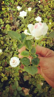 云南省昆明市呈贡区中天玫瑰