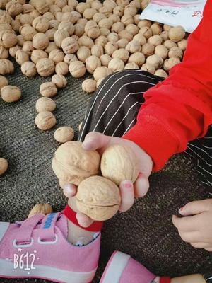 新疆维吾尔自治区阿克苏地区阿克苏市薄皮核桃