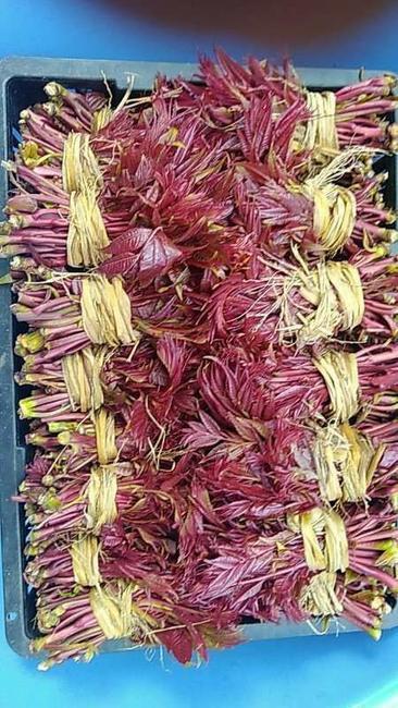 红香椿芽 9~12cm