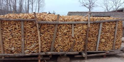 这是一张关于玉米干粮 杂质很少 水份14%-16% 的产品图片