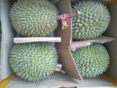 广西壮族自治区崇左市凭祥市猫山王榴莲 2 - 3公斤 90%以上