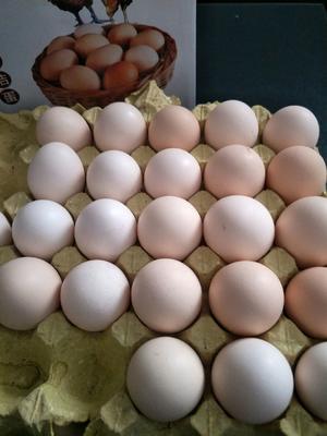 河南省周口市川汇区土鸡蛋 食用 箱装