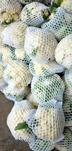 白面青梗松花菜 适中 2.5斤