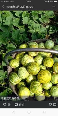 吉林省长春市德惠市德惠市布海镇鬼市香瓜 种植 100g以下 10cm