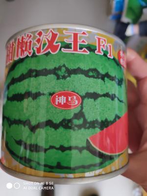这是一张关于超甜懒汉王西瓜种 二倍体杂交种 ≥90% 的产品图片