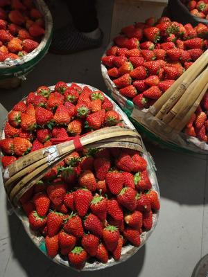安徽省合肥市长丰县红颜草莓 50克以上