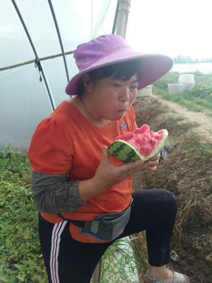 陕西省宝鸡市凤翔县无籽美都8424 无籽 1茬 9成熟 15斤打底