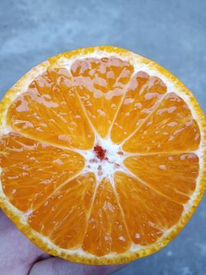这是一张关于汉源晚熟黄果柑 统货 3两以上 的产品图片