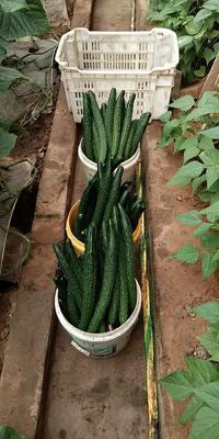 这是一张关于绿皮西葫芦 混装通货 的产品图片