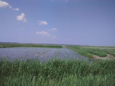 这是一张关于水田 转包 10~20年 3000~5000亩 的产品图片