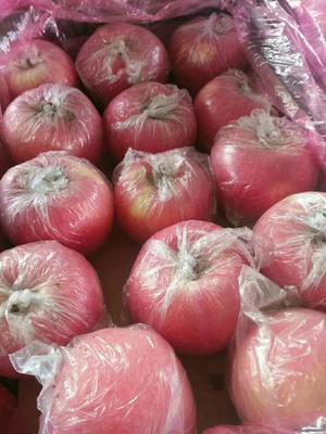 这是一张关于红富士苹果 80mm以上 全红 纸+膜袋 的产品图片