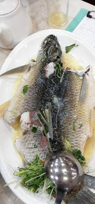 广东省佛山市南海区咸淡水鲩鱼 人工养殖 1.5-6公斤