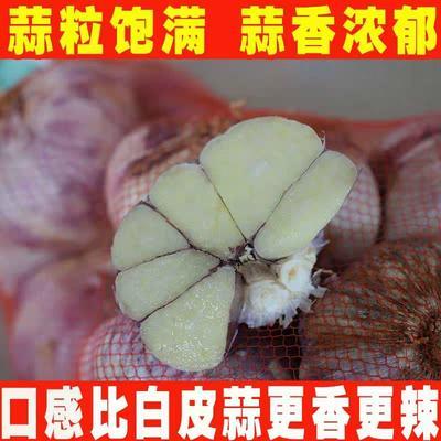 广东省惠州市惠阳区紫皮大蒜 混级统货 多瓣蒜