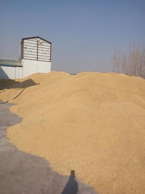 黑龙江省鸡西市鸡东县东北大米 一等品 中稻 粳米