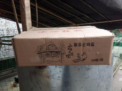 四川省达州市大竹县绿壳鸡蛋 食用 箱装