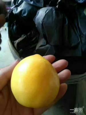 这是一张关于黄油桃 2两以上 50mm以上 的产品图片
