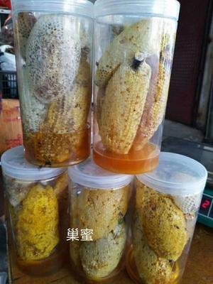 云南省临沧市临翔区小挂蜜 塑料瓶装 1年 100%