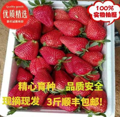 辽宁省大连市庄河市九九草莓 50克以上