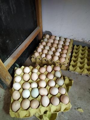 陕西省延安市志丹县乌鸡蛋 食用 箱装
