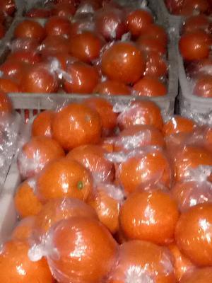 这是一张关于纽荷尔脐橙 65 - 70mm 4-8两 的产品图片