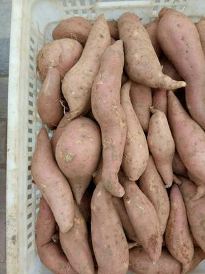 这是一张关于红香蕉红薯 混装通货 红皮 的产品图片