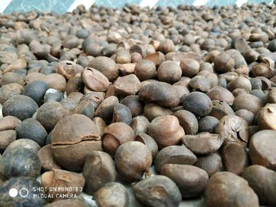 广西壮族自治区百色市田林县压榨一级山茶油