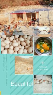 山东省临沂市沂南县土鸡蛋 食用 简包装